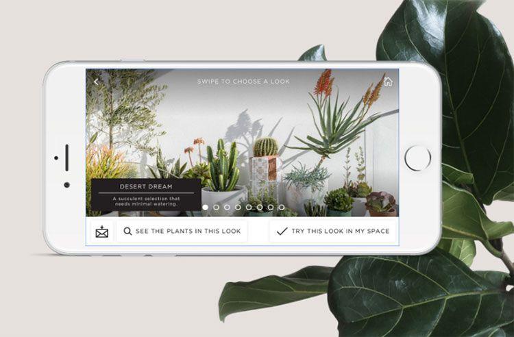 Plant Balance Life