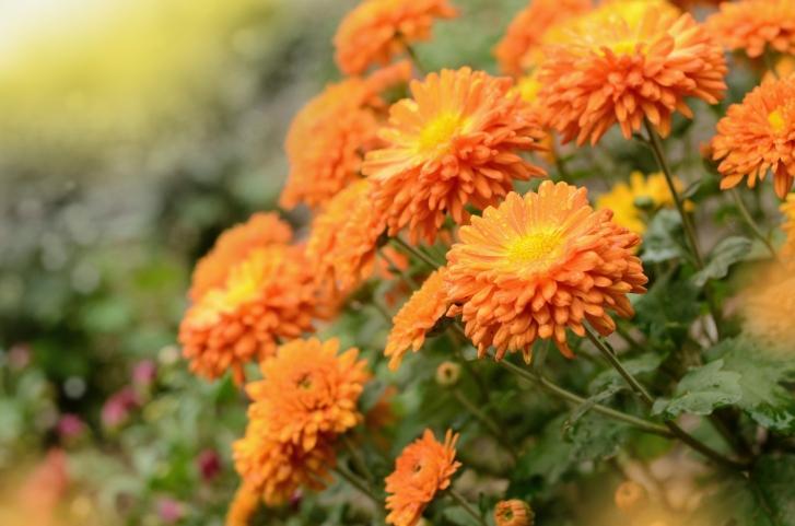Jakie kwiaty najlepiej hodować na balkonie