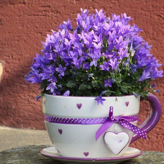 10 roślin, które powinniście mieć w sypialni